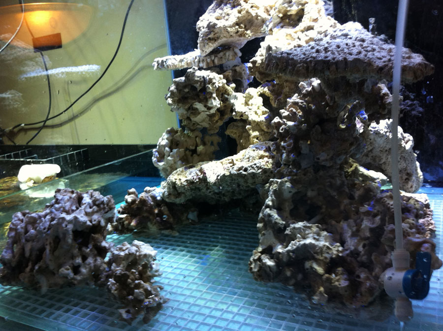 Rockwork 01 - 100 cube and 65 frag tank setup