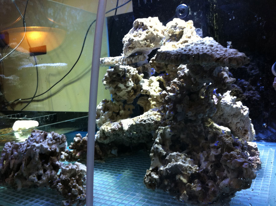 Rockwork 02 - 100 cube and 65 frag tank setup