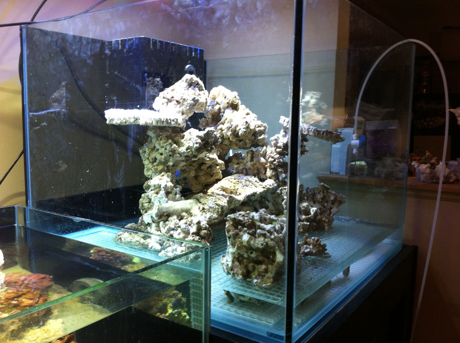Rockwork 03 - 100 cube and 65 frag tank setup