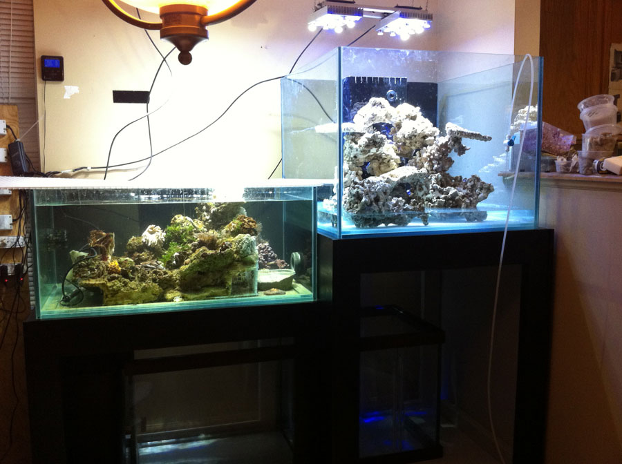 Setup 01 - 100 cube and 65 frag tank setup