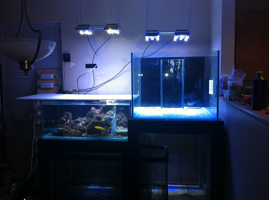 Large Reef Aquarium 91g 180g 100 Cube And 65 Frag Tank Setup